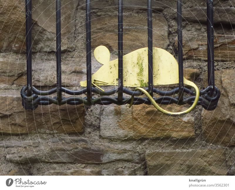 A golden metal mouse sits in a black metal cage, attached to the top of a historic wall Mouse trap cagey Animal Captured Grating stylized Exterior shot