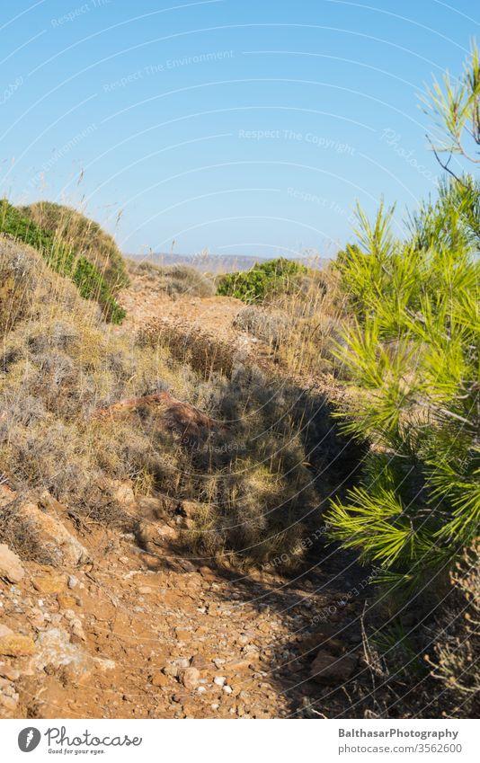 Greece - Trail along the coast Coast Mediterranean sea ägais Wilderness Lanes & trails stones undergrowth Coniferous trees grasses Lichen Dry Yellow Sun