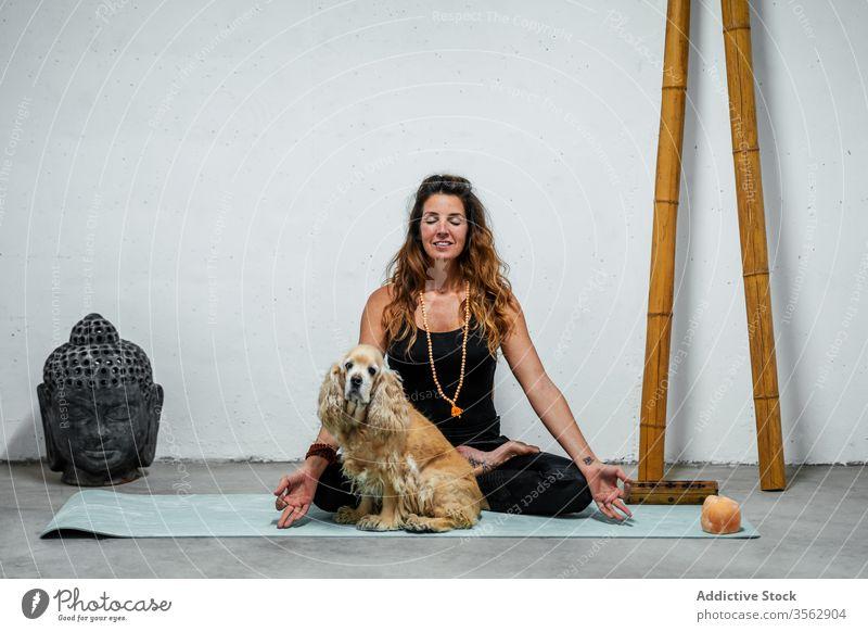 Serene woman practicing yoga in Lotus pose near dog lotus pose meditate practice padmasana content concentrate calm female serene english cocker spaniel animal