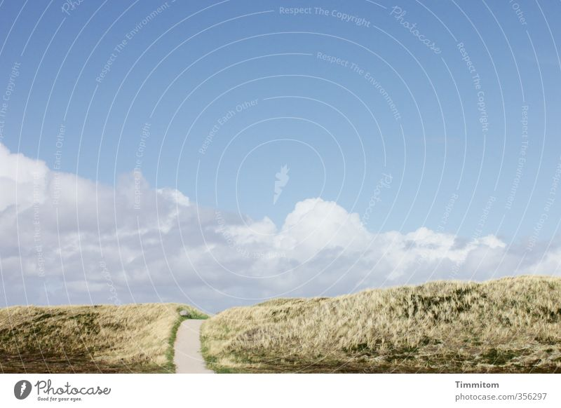 The way. Vacation & Travel Environment Nature Plant Sky Clouds Denmark Lanes & trails Simple Natural Blue White Emotions Dune Marram grass Far-off places