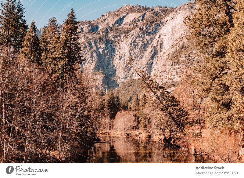 Majestic mountain ridge and coniferous forest cliff rock landscape national yosemite park granite picturesque scenery sunny blue sky travel california usa