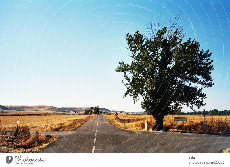 Tree in the Spanish Meseta Spain Direction Badlands meseta Street Nature Lanes & trails Vantage point Way of St James
