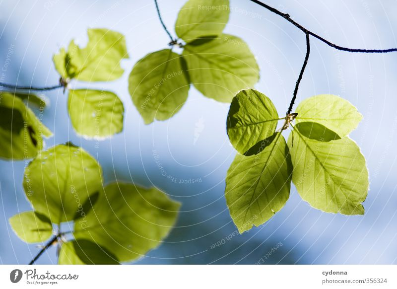 beech leaves Healthy Life Harmonious Well-being Relaxation Calm Environment Nature Sky Spring Summer Plant Tree Leaf Esthetic Uniqueness Experience