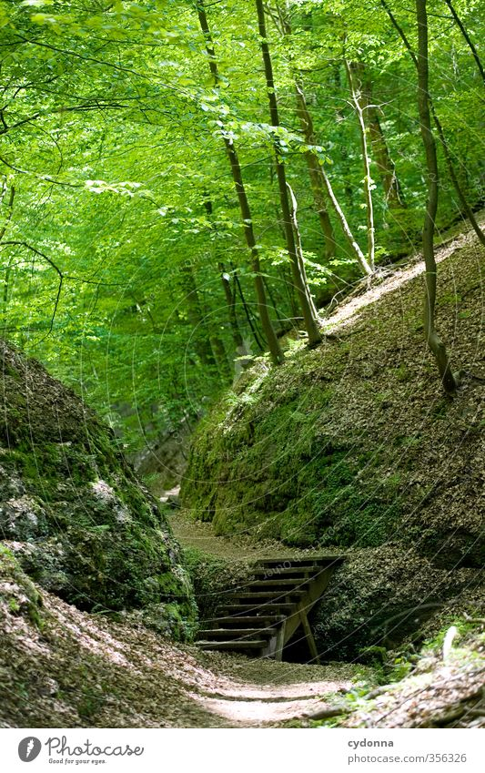 Stairs in the forest Healthy Life Harmonious Relaxation Calm Trip Adventure Hiking Environment Nature Landscape Spring Summer Forest Rock Uniqueness Discover