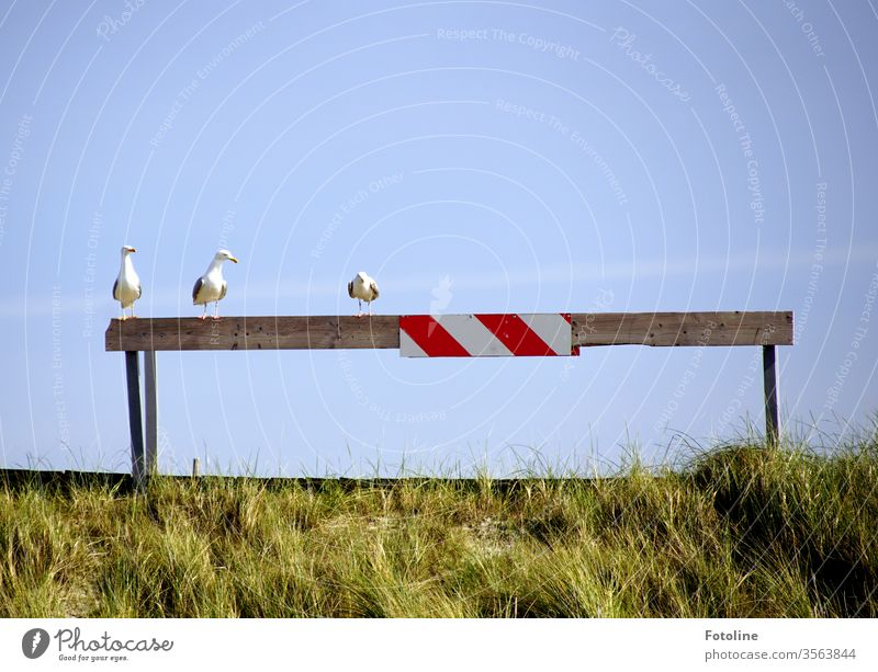 The three ladies from... ...or three seagulls sitting on a barricade... Sky Blue sky Summer Day Exterior shot Deserted Beautiful weather Copy Space top Nature