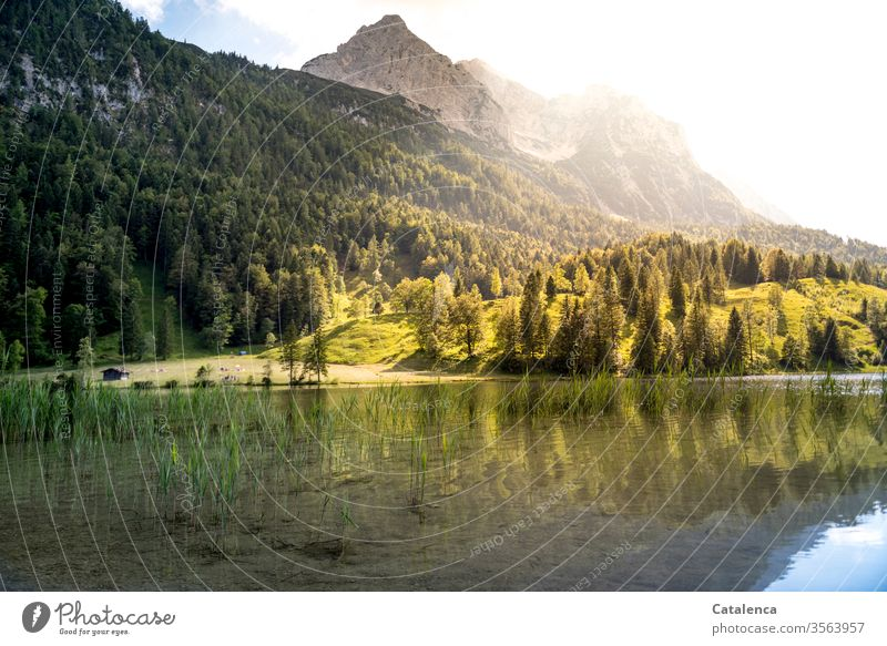 View from Ferchensee to the Wetterstein in the early morning mountains Mountain Alps Meadow Forest spruces firs Grass Mountain lake Lake Water Sky