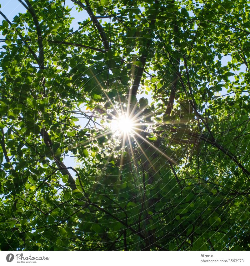 Sunbeams in the forest Sunlight Bright green rays Forest Stars huts Brilliant Illuminate Nature Moody Hope foliage Central stellar Tabloid Worm's-eye view