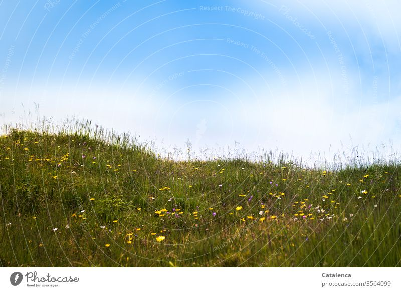 On a summer morning on the alp Alpine pasture flora Plant Grass Herbs flowers bleed fragrances blossom wax Summer Sky Clouds Beautiful weather green Yellow Blue
