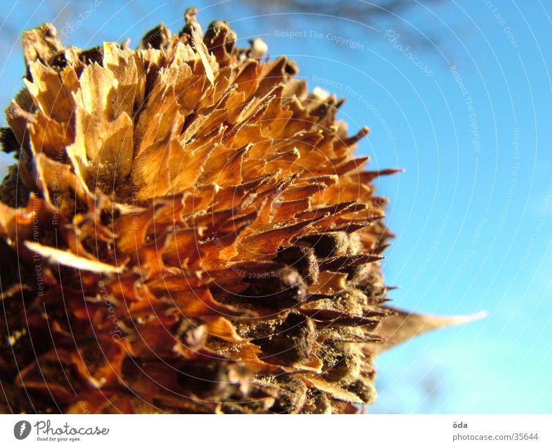 elapsed Sunflower Limp Flower Faded Thin