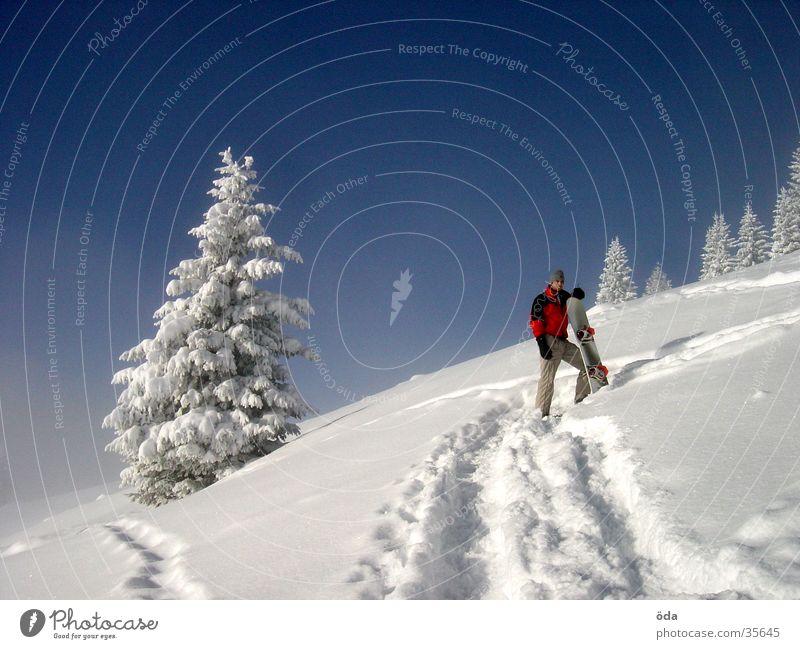 Vacation & Travel Tree Winter Snow Wait Beautiful weather Break Tracks Upward Snowscape Blue sky Slope Snowboard Coniferous trees Winter mood Ski tour