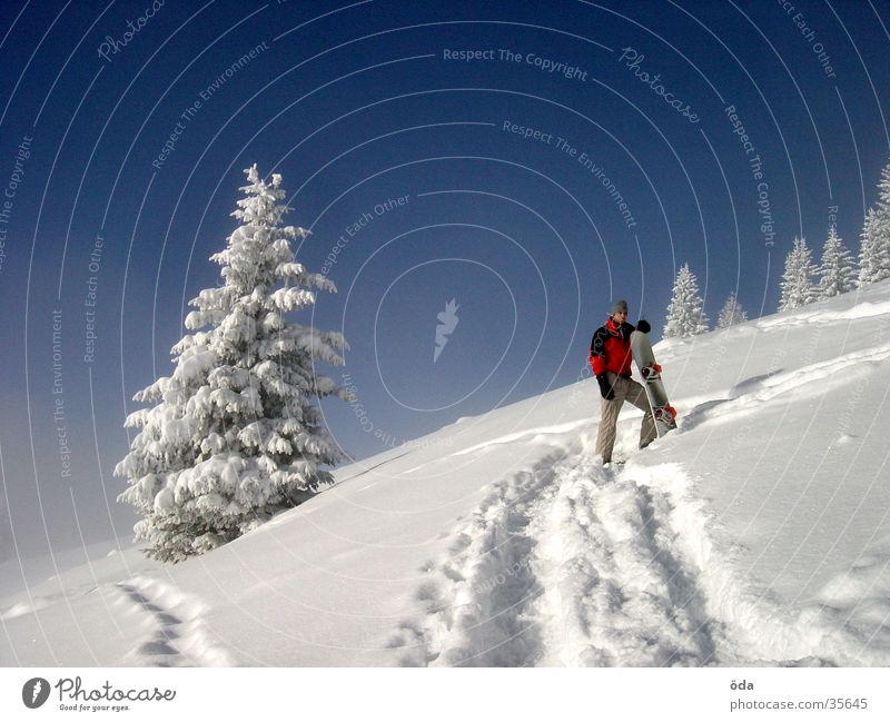 Vacation & Travel Tree Winter Snow Wait Beautiful weather Break Tracks Upward Snowscape Blue sky Slope Snowboard Coniferous trees Winter mood Ski tour