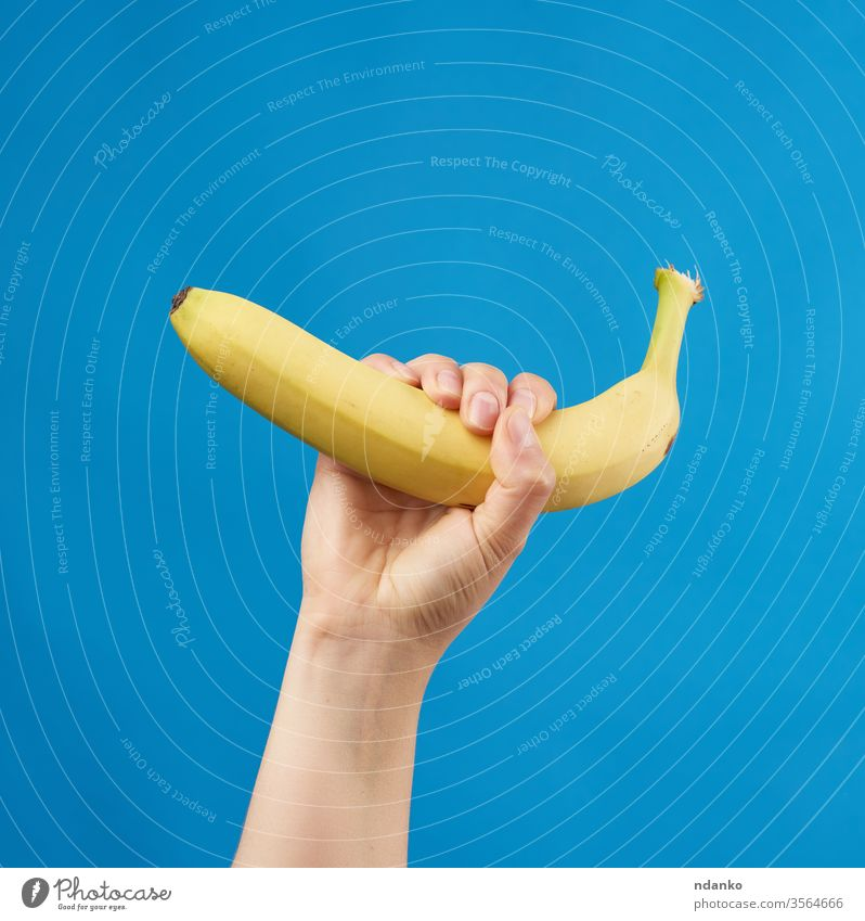 female hand holds a yellow ripe banana on a blue background woman body breakfast caucasian organic appetizing arm closeup color diet dieting eat exotic finger