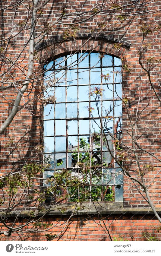 Industrial charm | windows with a view Industrial construction Industry Charm Window Old Broken Insight Vista Decline Vacancy Sky Skyward Branches and twigs