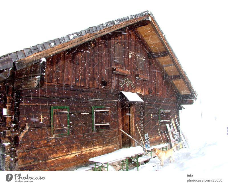 snow-covered Elmau Alm Winter Alpine pasture Snow Window Dog Remote Loneliness Architecture Hut