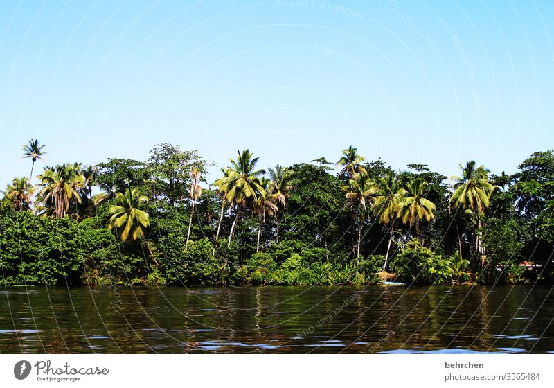 be on the way Water especially Virgin forest Palm tree River bank Exotic Caribbean Fantastic Exceptional Wanderlust Far-off places Freedom Tourism Trip
