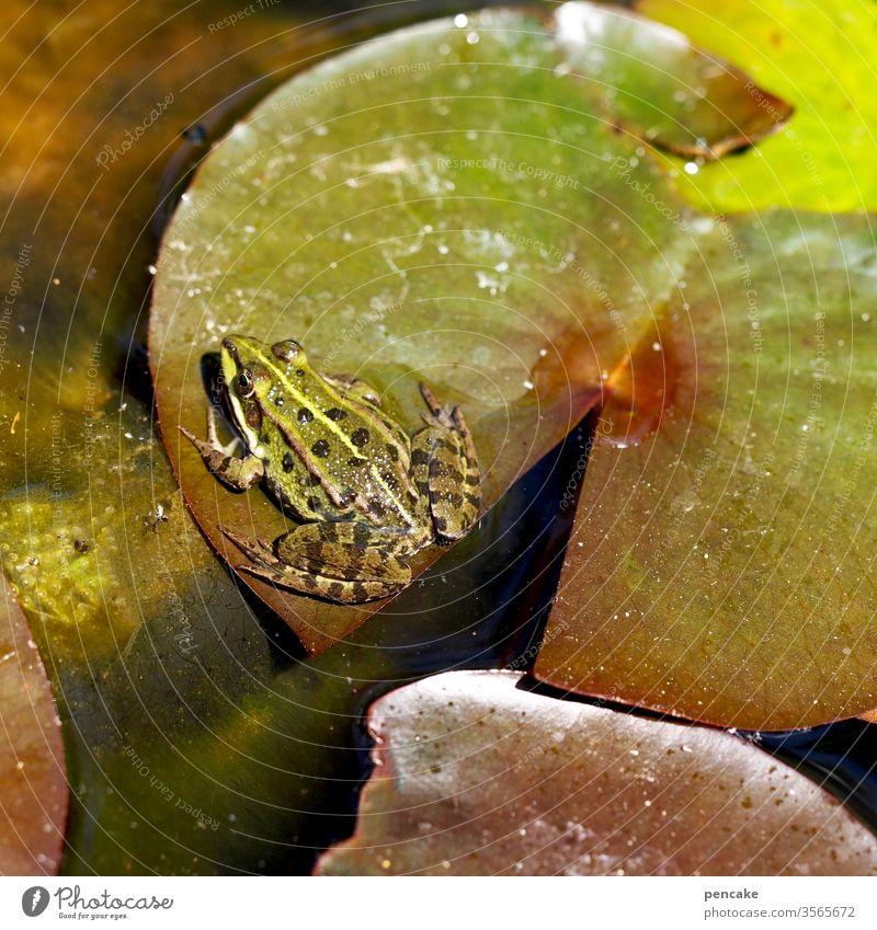 storchperspektive Frosch Seerose Seerosenblatt Teich Wasser Tier sitzen Sonnenschein Garten Natur Lebewesen Detail Pflanze grün Storch Perspektive