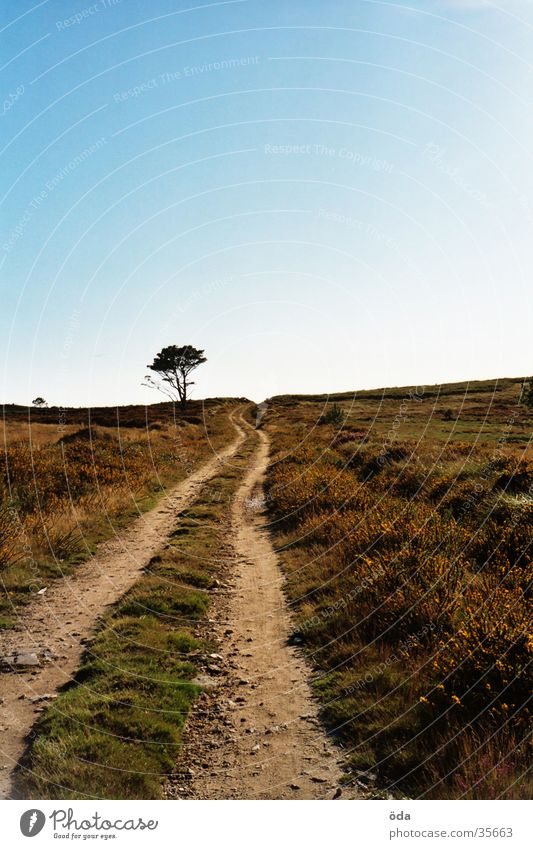 where to? Infinity Tree Far-off places Lanes & trails Blue sky Street Landscape Way of St James