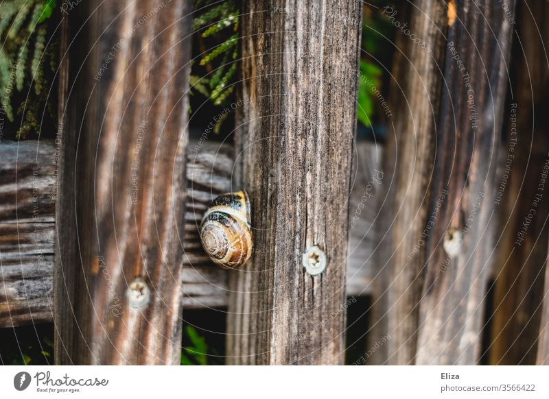 A snail in its shell on a wooden fence Crumpet Snail shell Wooden fence Fence out Nature Round covert Close-up Spiral Brown Hide House (Residential Structure)