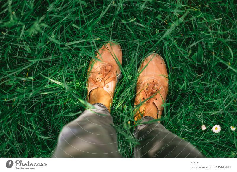 A person is standing in the green meadow, you can only see his legs and shoes seen from above Meadow Footwear Legs foot Summer Sunlight Daisy Grass Lawn Garden