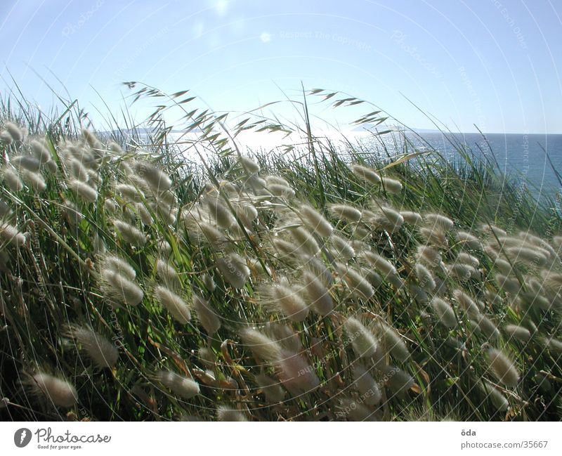 corfu other Grass Wheat Light Ocean Sunset