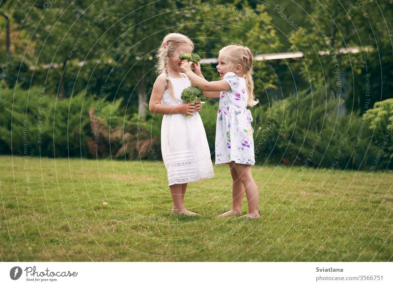 Two little girls in sarafans and pigtails in a green garden are holding broccoli in their hands. They close their eyes, laugh. Healthy food concept, green vegetarian food.