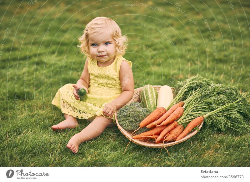 A little blond girl in a yellow dress, barefoot, holds a cucumber in her hand, sits next to a large basket of vegetables on the grass.Healthy food, green vegetarian food.