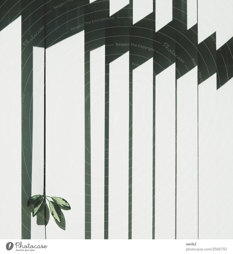 misdemeanour Window Detail Venetian blinds Slat blinds slats Plant leaves office plant peek inquisitorial bold Sunlight Contrast lines Shadow Pattern