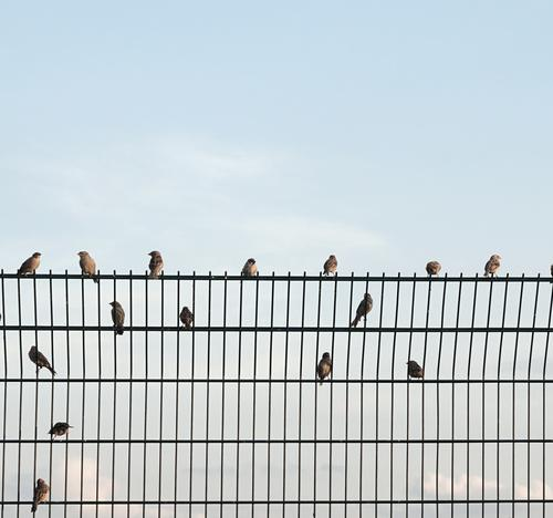 pecking order FenceBorder Grating Metal Metalware seat Arrangement birds Sparrows organization Sit Break chatter tweet chirp Distributed Sky Exterior shot