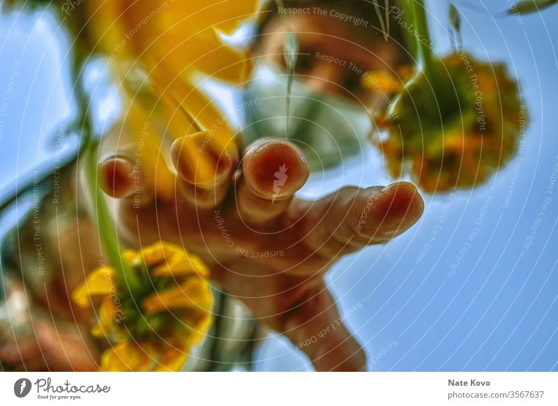 Gardener with mask reaching into a group of yellow flowers in order to pick one of the yellow flowers Yellow Yellowed Yellowness Yellow-orange Yellow-gold Hand