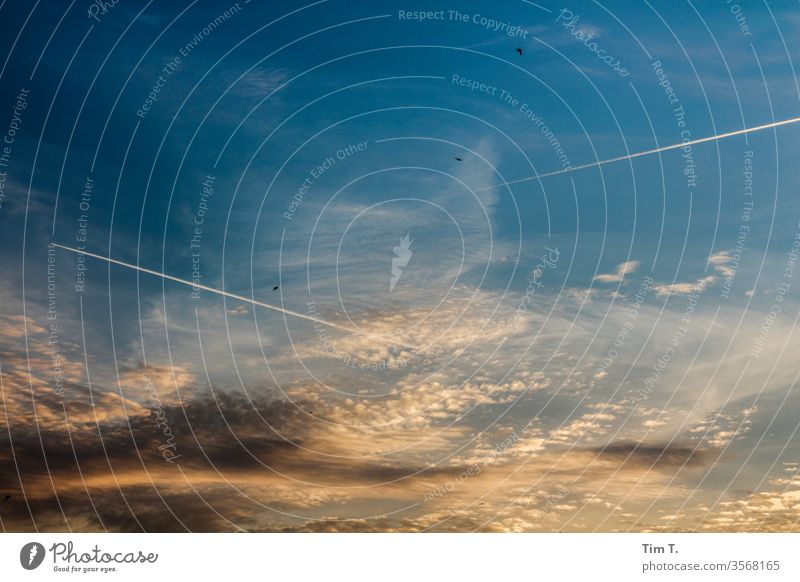 Sky over Berlin Vapor trail Blue Airplane Aviation Clouds Vacation & Travel Flying Passenger plane Colour photo Exterior shot Tourism Deserted Copy Space top