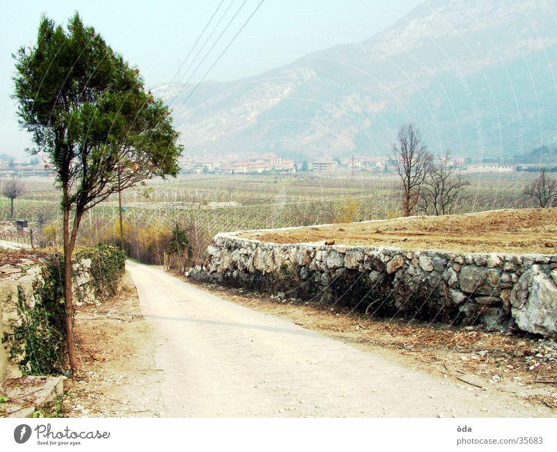 Tree Street Lanes & trails Tracks Footpath Stone wall