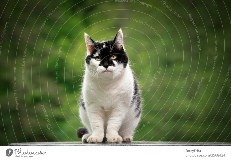Portrait of a black and white cat with beautiful pattern on the face outside Cat pets mixed breed cat Outdoors Nature White Black Pattern One animal green