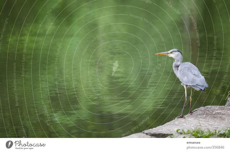 Nature Green Water Landscape Animal Coast Gray Stone Lake Rock Bird Wait Large Stand Wing River