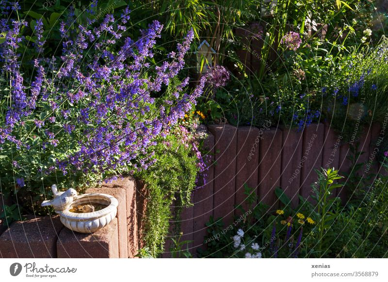 Garden picture with bird bath, purple catnip and reddish palisade of stone Bird watering place Nature Summer bleed Plant Life Living or residing Bamboo