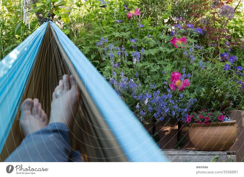 From the relaxing hammock: view of flowers in the garden and feet with daisies Garden Hammock foot relaxation Peony honorary prize Flowerpot Relaxation