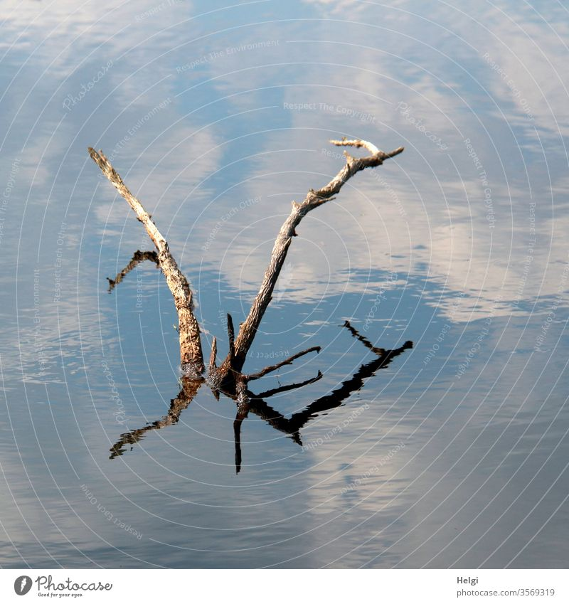 Sea monster - dried up branches rise from a moor lake and reflect themselves and the blue sky with clouds Bog Moor lake Branch Shriveled reflection Sky Clouds