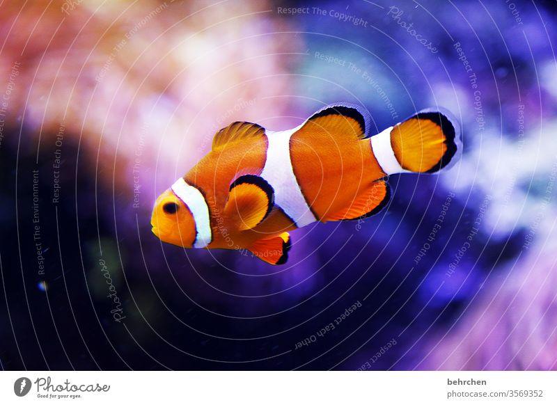 friday fishi variegated Exotic Swimming & Bathing Dive Close-up Blue Fish Animal Flake be afloat Aquarium Colour photo Underwater photo Animal portrait Deserted