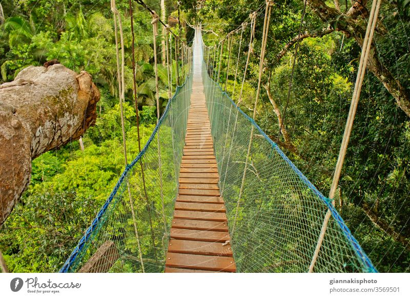 Suspended Bridge Between Two Big Trees, Amazon Basin, Peru, South America Adventure Beautiful Beauty Of Nature Color Colorful Extreme Jungle Landmark
