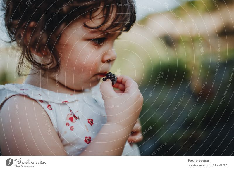 Little girl eating blackberries Blackberry Blackberry bush Child Organic produce Healthy Healthy Eating Lifestyle Caucasian Diet Delicious Blueberry Close-up