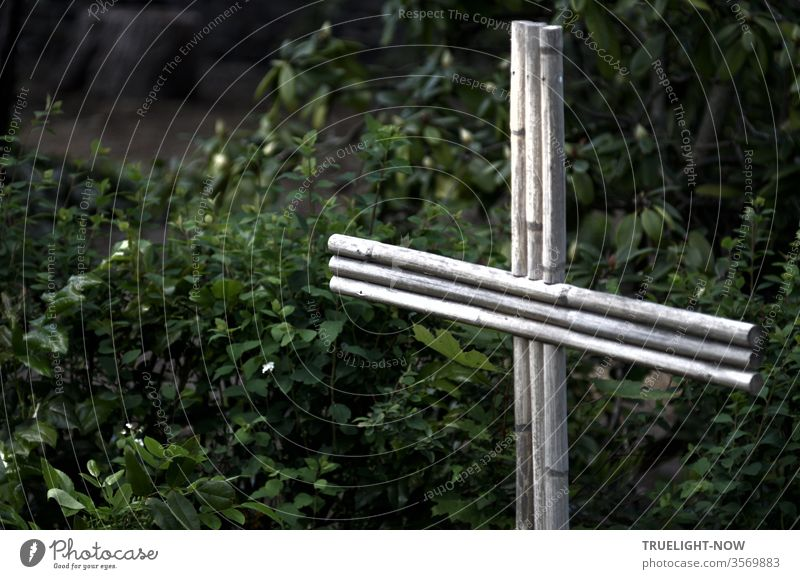An unusually simple wooden cross made of light bamboo sticks, accurately joined together, stands as a striking religious symbol on a grave, surrounded by dense dark green plants