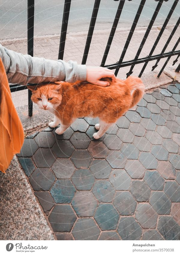 street cat Cat Woman Pet Cuddling Love To console Lovesickness sorrow carefree Sadness weaker Safety (feeling of) depression burnout Red Animal Animal portrait