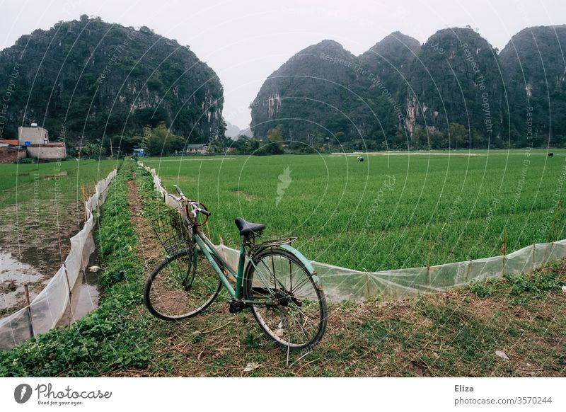 A bicycle in front of rice fields in Ninh Binh, Vietnam Bicycle Asia Vacation & Travel Landscape Asian Nature Rice Travel photography Agriculture