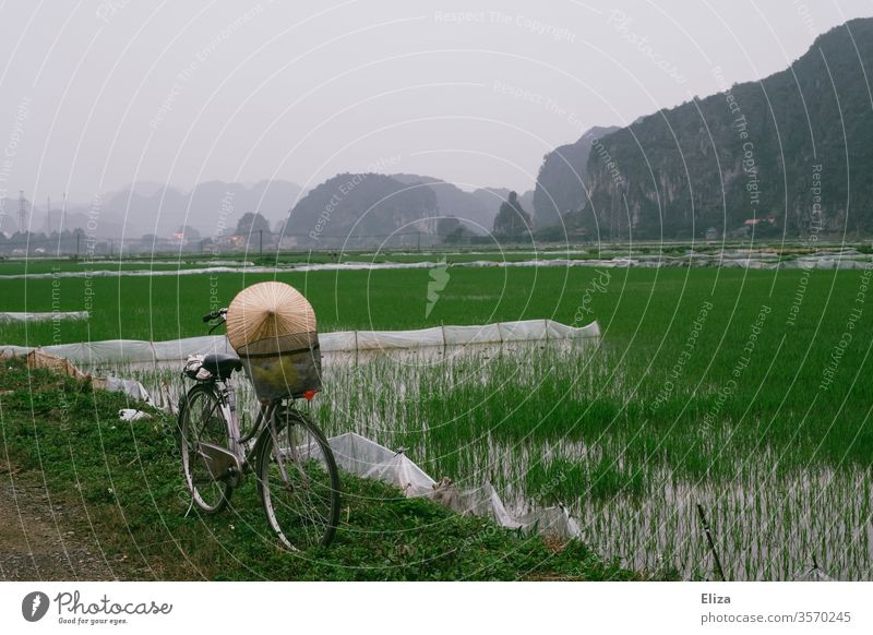 A bicycle with a conical hat in front of green rice fields in Ninh Binh, Vietnam conical cap rice hat Landscape Rice cultivation Asian Food Field Extend