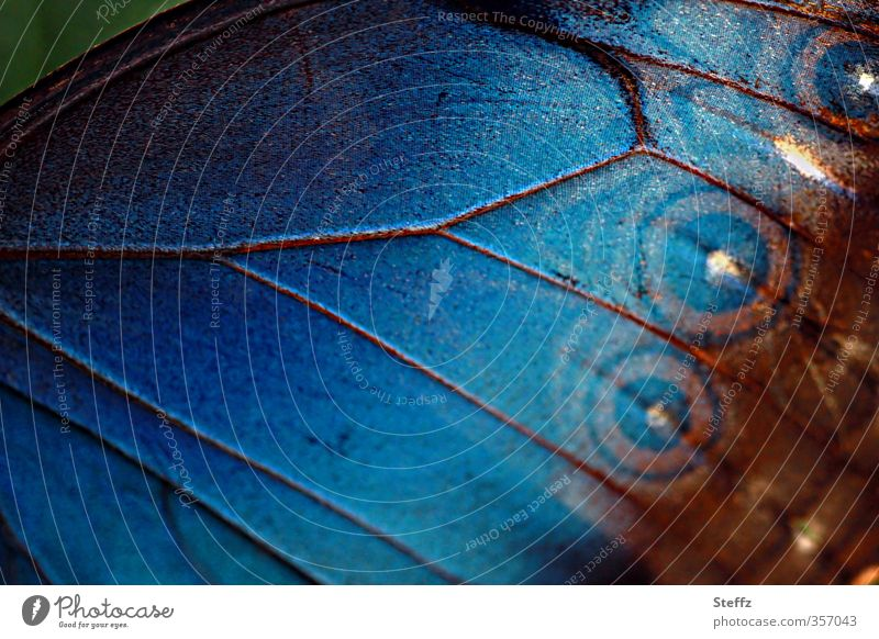 nature blue colour line a royalty free stock photo from photocase