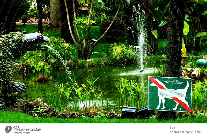 Water Tree Green Plant Garden Dog Signs and labeling Well Bans English