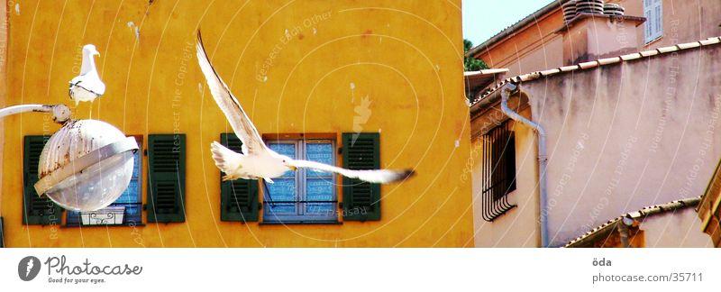 mediterranean bird show Bird Pigeon Mediterranean House (Residential Structure) Lantern White Nice Aviation Flying Wing