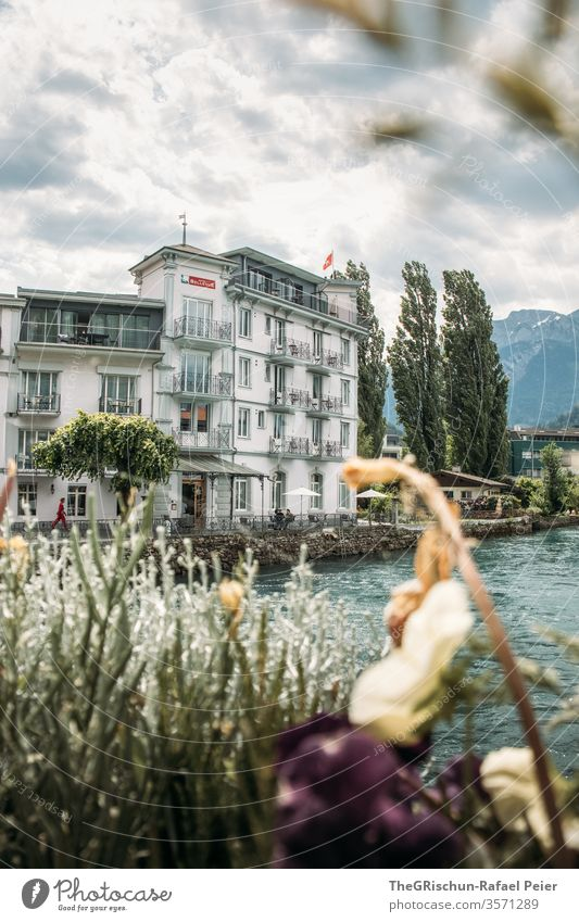 View of a historic house on the river Interlaken Switzerland Tourism River tree Exterior shot Colour photo Deserted Day Vacation & Travel Trip Summer Landscape