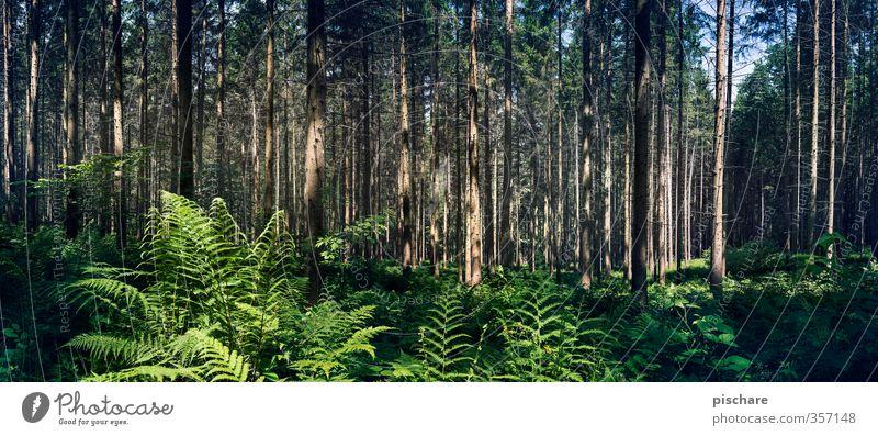 Nature Plant Tree Landscape Forest Dark Bushes Exotic Fern