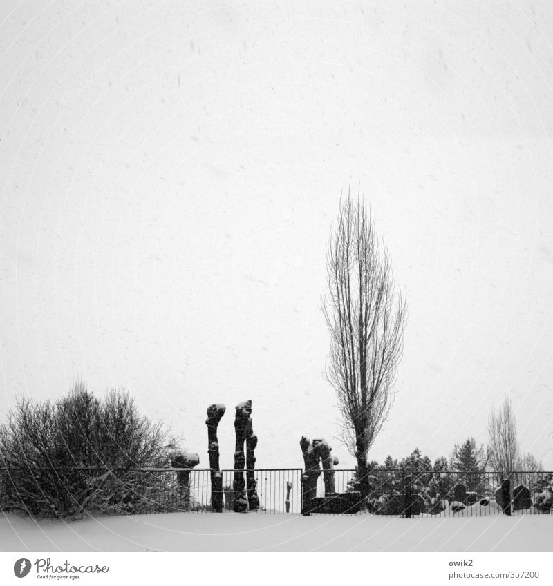 Sky Old Plant Tree Sadness Snow Death Bright Snowfall Weather Ice Bushes Climate Transience Eternity Hope