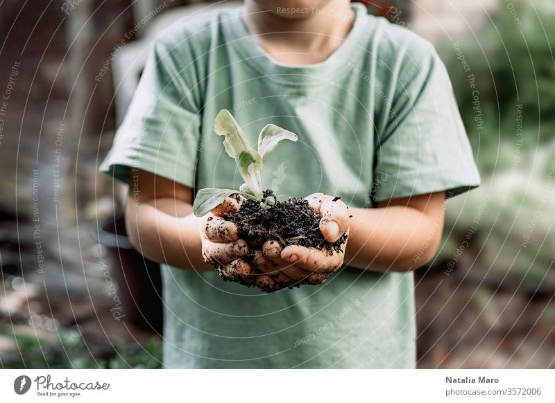 Young plant sprout in little boy's hands. Concept of farming and environment protection nature life small spring young concept new soil green agriculture